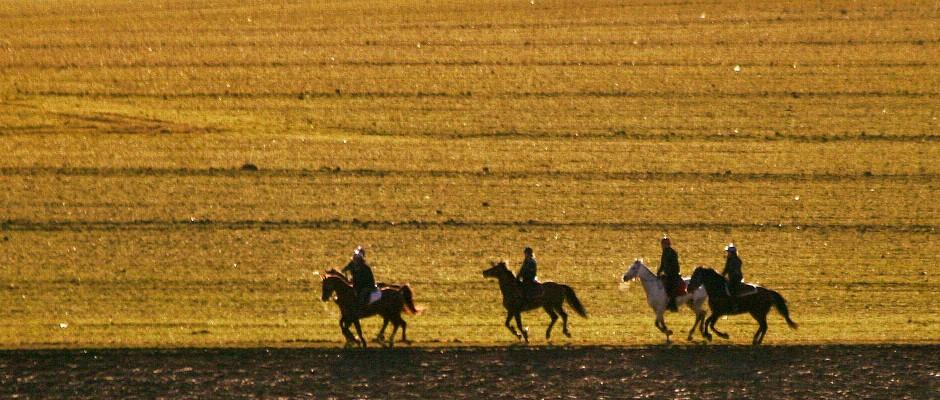 balade-équitation-ce-premium-ile-de-france comité dentreprise